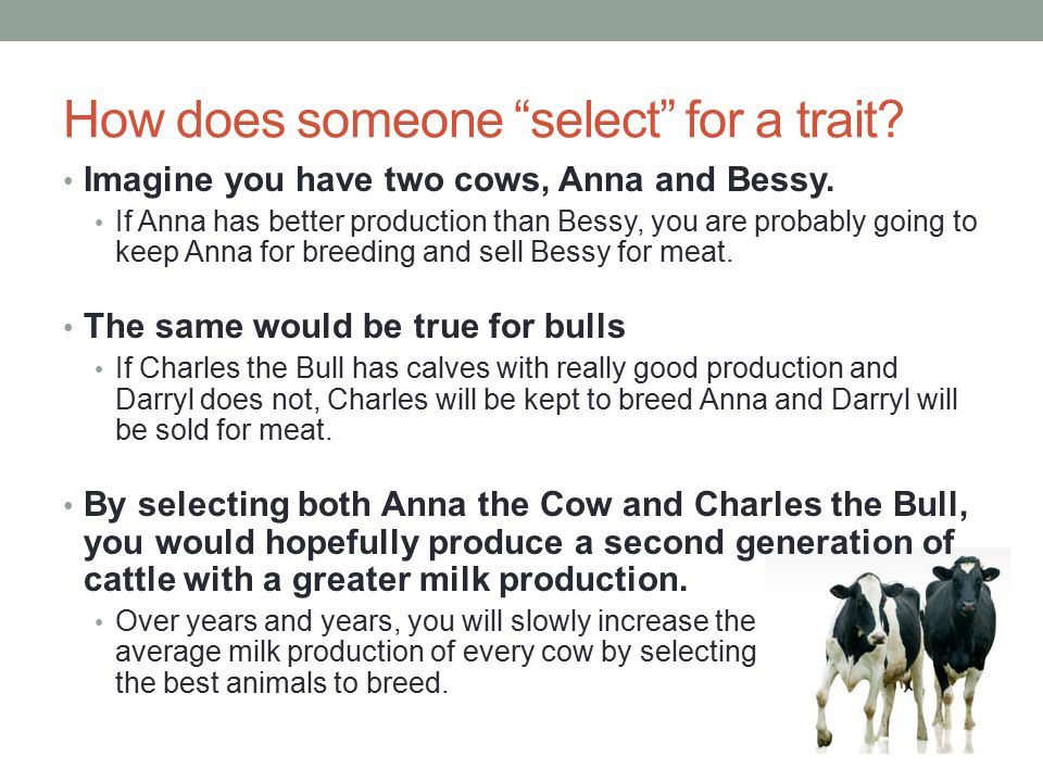 Breed Associations As the benefits of selective breeding became better understood, breed associations began to form Their mission was to support farmers as they developed better, more productive breeds.