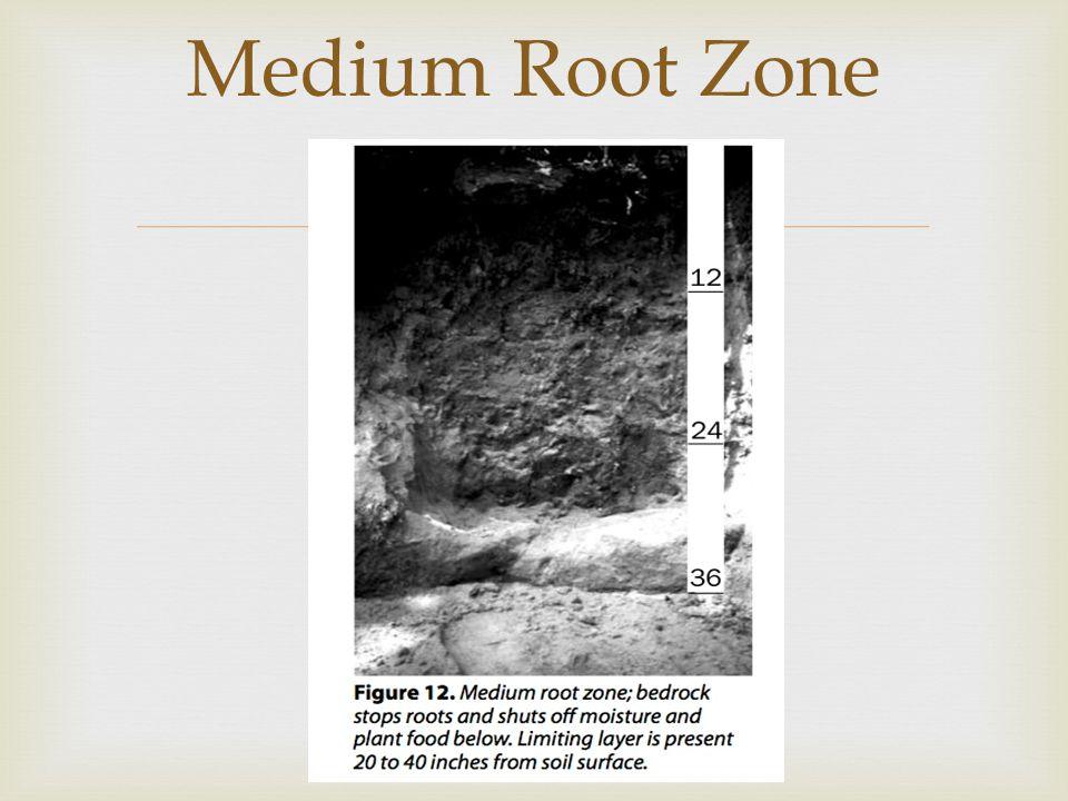  Medium Root Zone