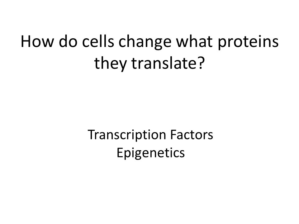 How do cells change what proteins they translate Transcription Factors Epigenetics