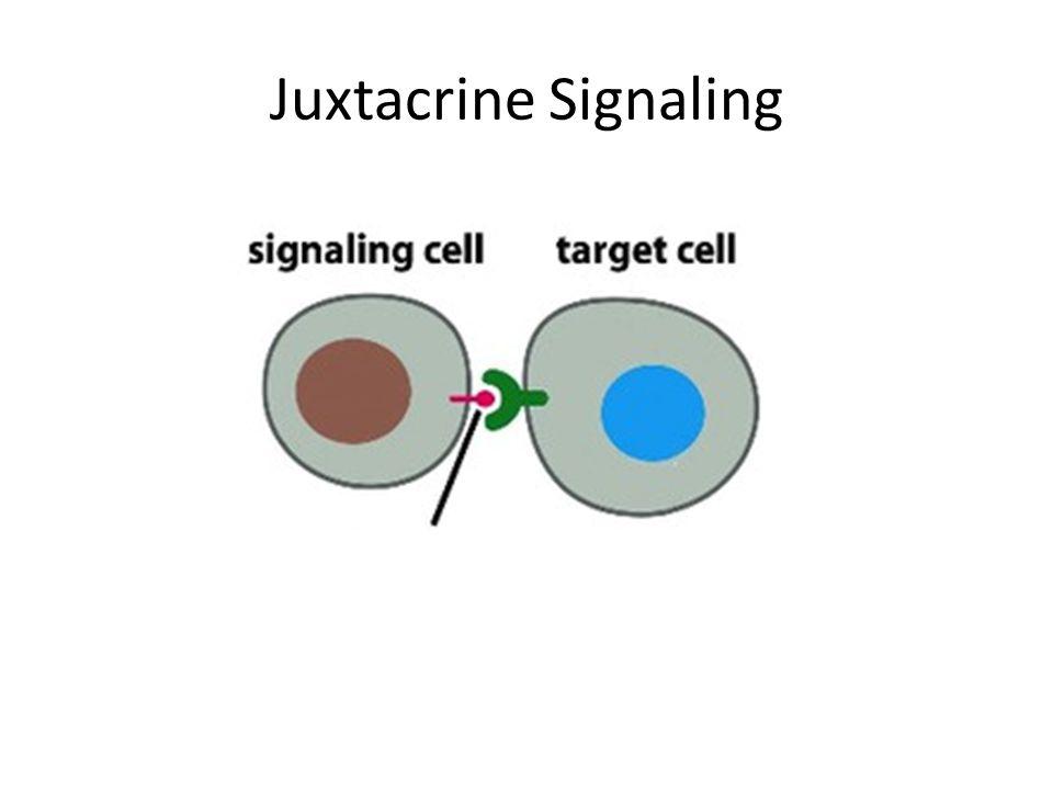Juxtacrine Signaling