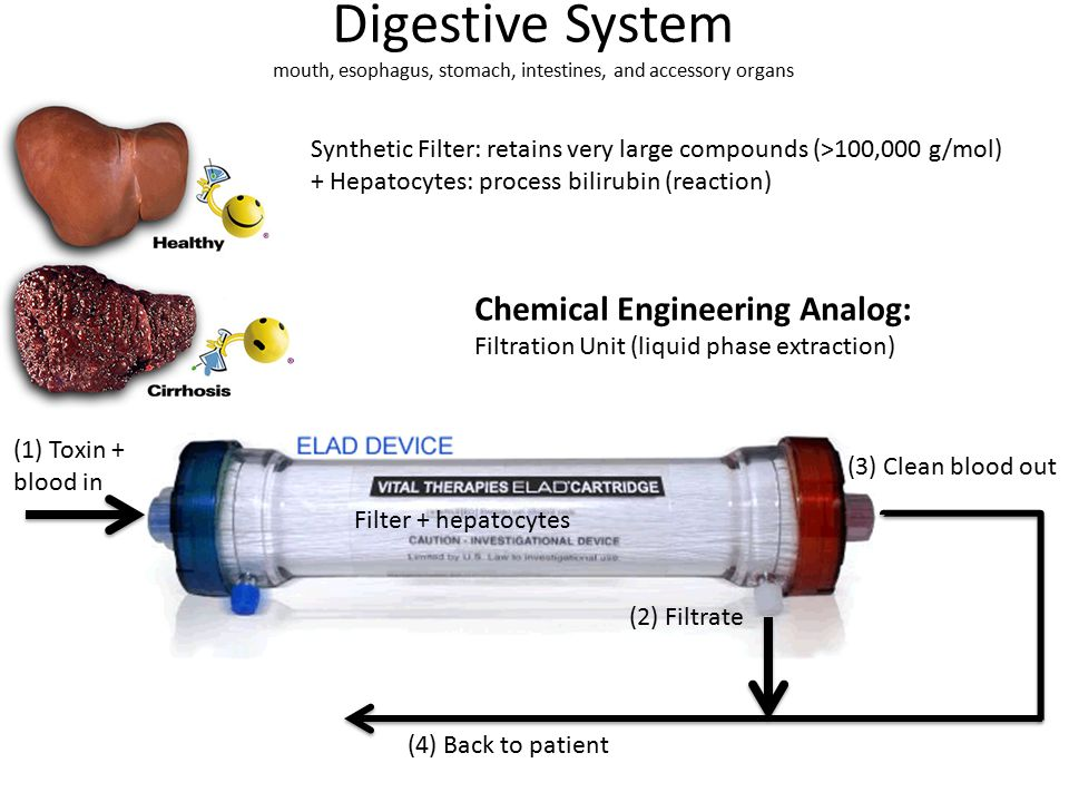 Digestive System mouth, esophagus, stomach, intestines, and accessory organs (2) Filtrate (3) Clean blood out (1) Toxin + blood in Synthetic Filter: retains very large compounds (>100,000 g/mol) + Hepatocytes: process bilirubin (reaction) Filter + hepatocytes (4) Back to patient Chemical Engineering Analog: Filtration Unit (liquid phase extraction)