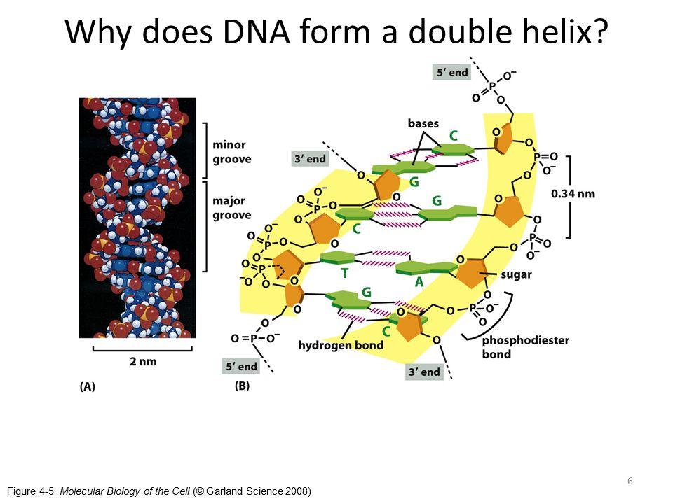17 Human cells are Eukaryotes. Eukaryotes keep their cell functions separated