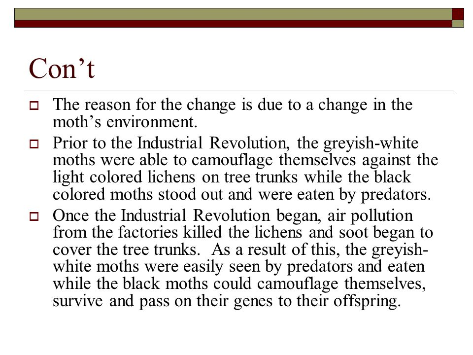 Con't  The reason for the change is due to a change in the moth's environment.  Prior to the Industrial Revolution, the greyish-white moths were abl