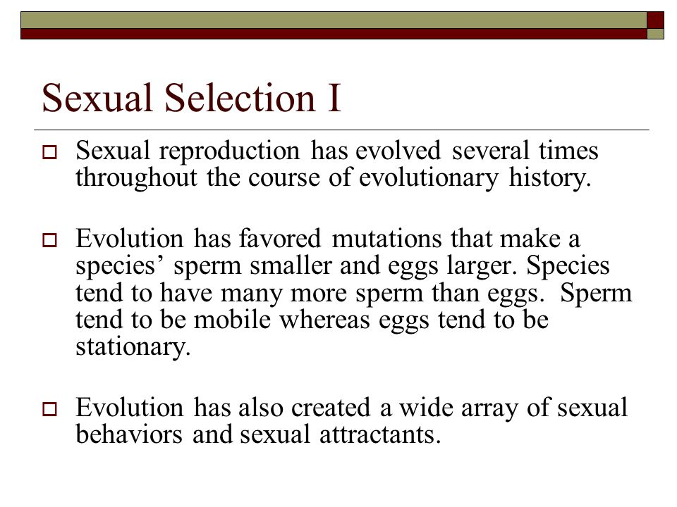 How did life begin? Did two rocks have intercourse and a mutation occurred?