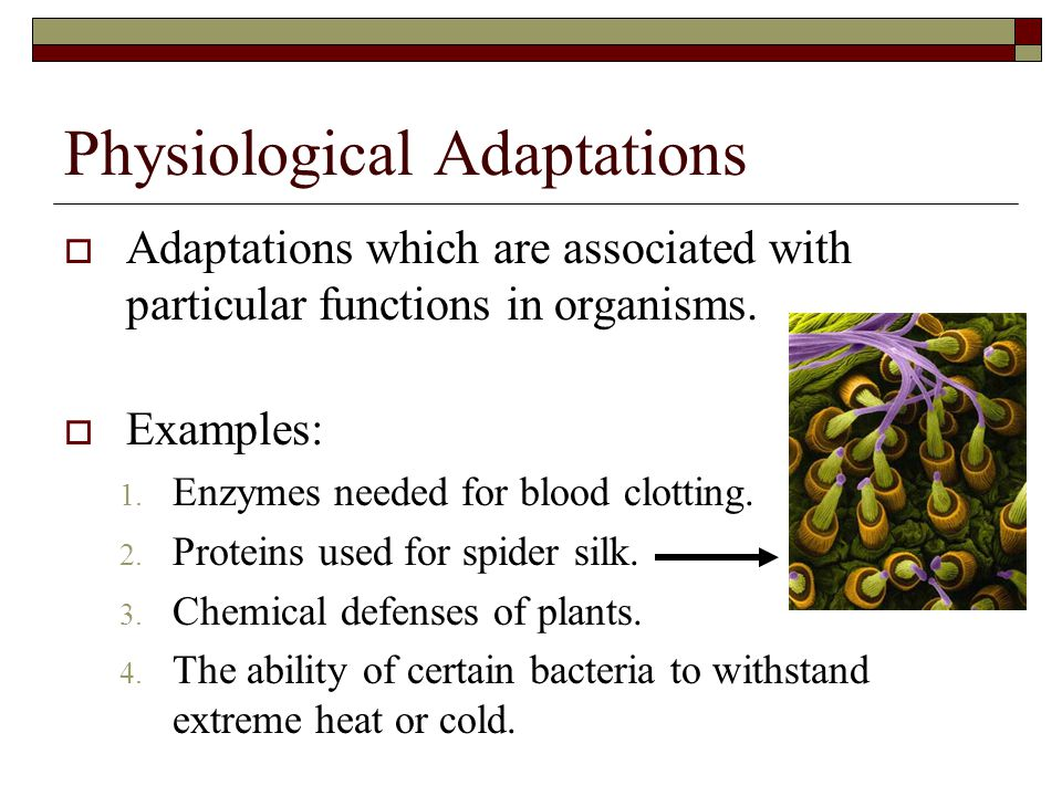 Physiological Adaptations  Adaptations which are associated with particular functions in organisms.  Examples: 1. Enzymes needed for blood clotting.