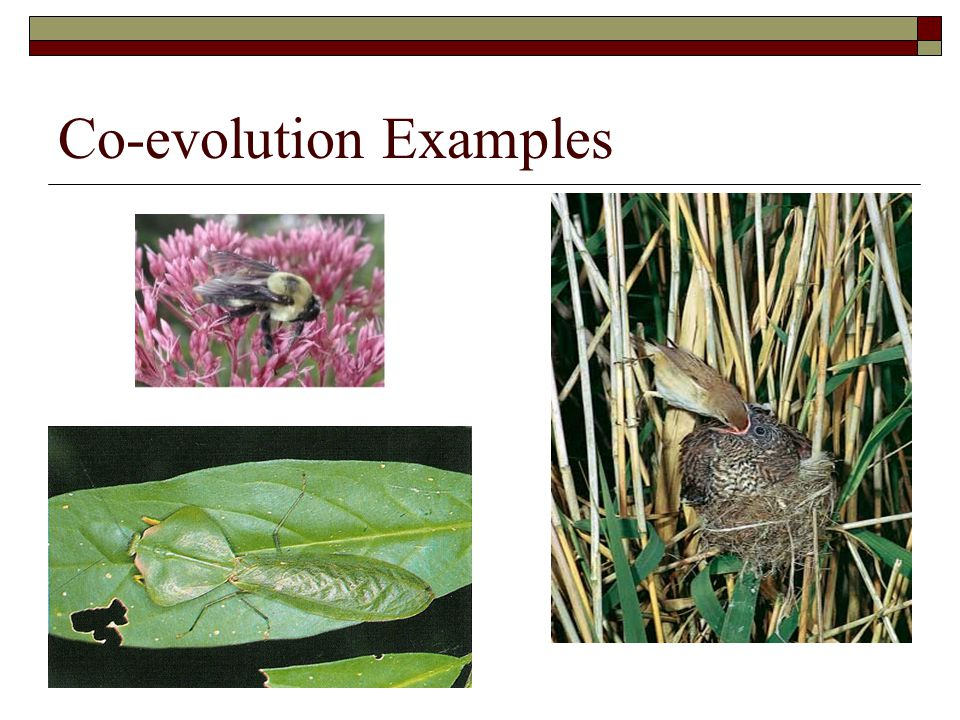 Co-evolution Examples