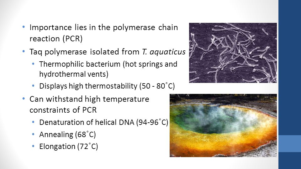 Importance lies in the polymerase chain reaction (PCR) Taq polymerase isolated from T.