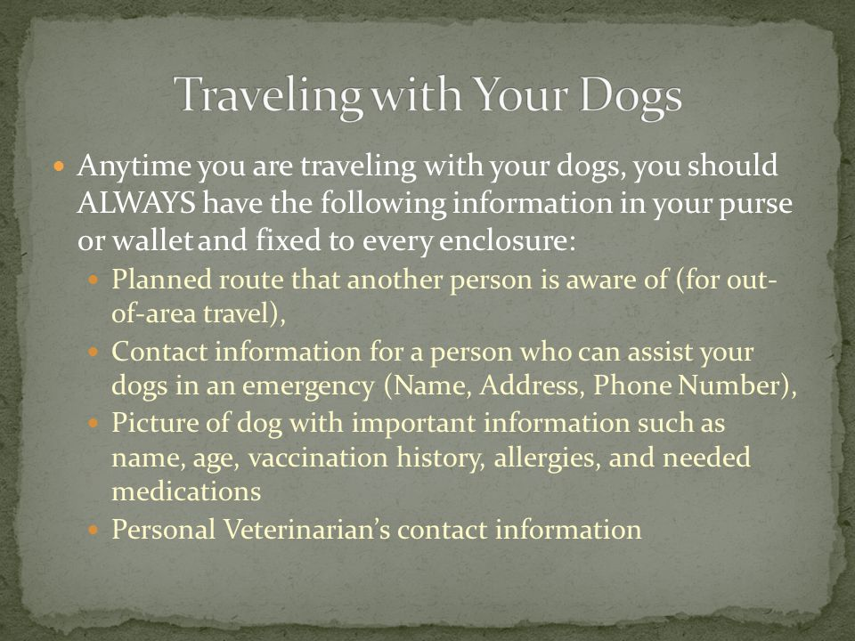 Anytime you are traveling with your dogs, you should ALWAYS have the following information in your purse or wallet and fixed to every enclosure: Plann