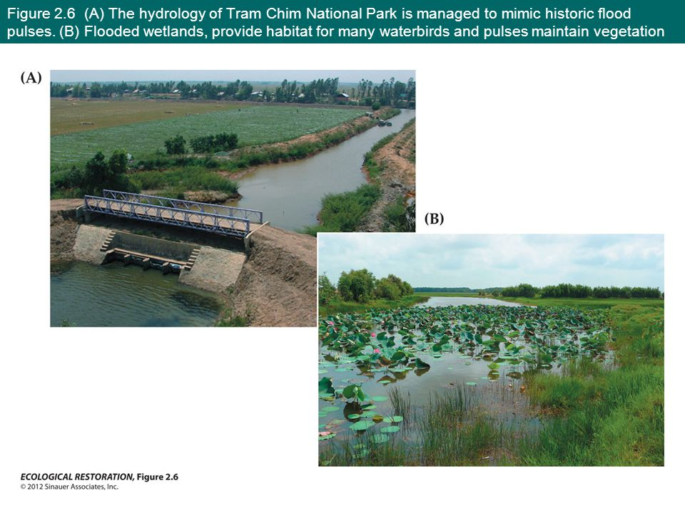 Figure 2.6 (A) The hydrology of Tram Chim National Park is managed to mimic historic flood pulses.