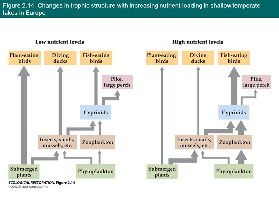 Figure 2.14 Changes in trophic structure with increasing nutrient loading in shallow temperate lakes in Europe