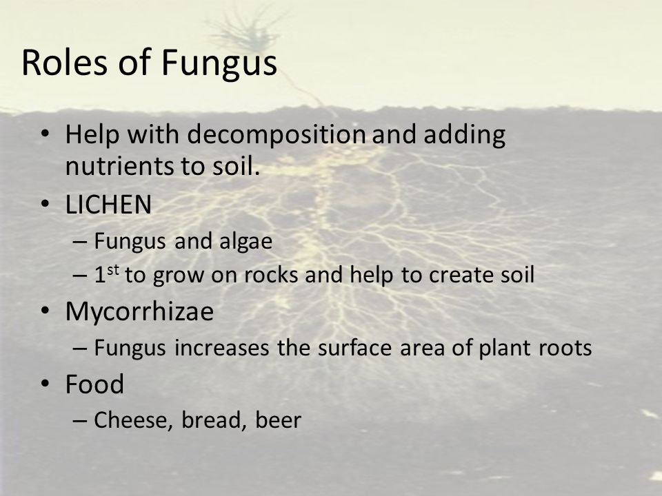 Roles of Fungus Help with decomposition and adding nutrients to soil. LICHEN – Fungus and algae – 1 st to grow on rocks and help to create soil Mycorr
