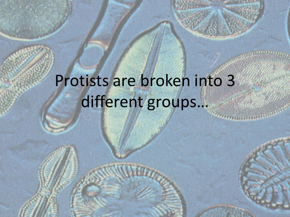 Protists are broken into 3 different groups…