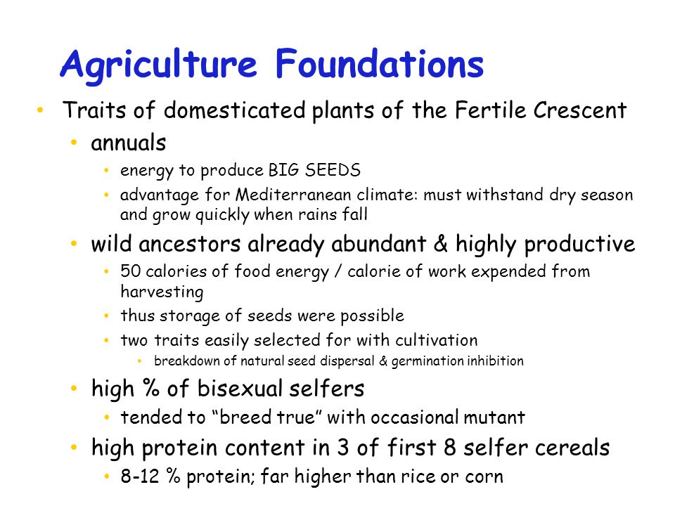 Agriculture Foundations Traits of domesticated plants of the Fertile Crescent annuals energy to produce BIG SEEDS advantage for Mediterranean climate: must withstand dry season and grow quickly when rains fall wild ancestors already abundant & highly productive 50 calories of food energy / calorie of work expended from harvesting thus storage of seeds were possible two traits easily selected for with cultivation breakdown of natural seed dispersal & germination inhibition high % of bisexual selfers tended to breed true with occasional mutant high protein content in 3 of first 8 selfer cereals 8-12 % protein; far higher than rice or corn