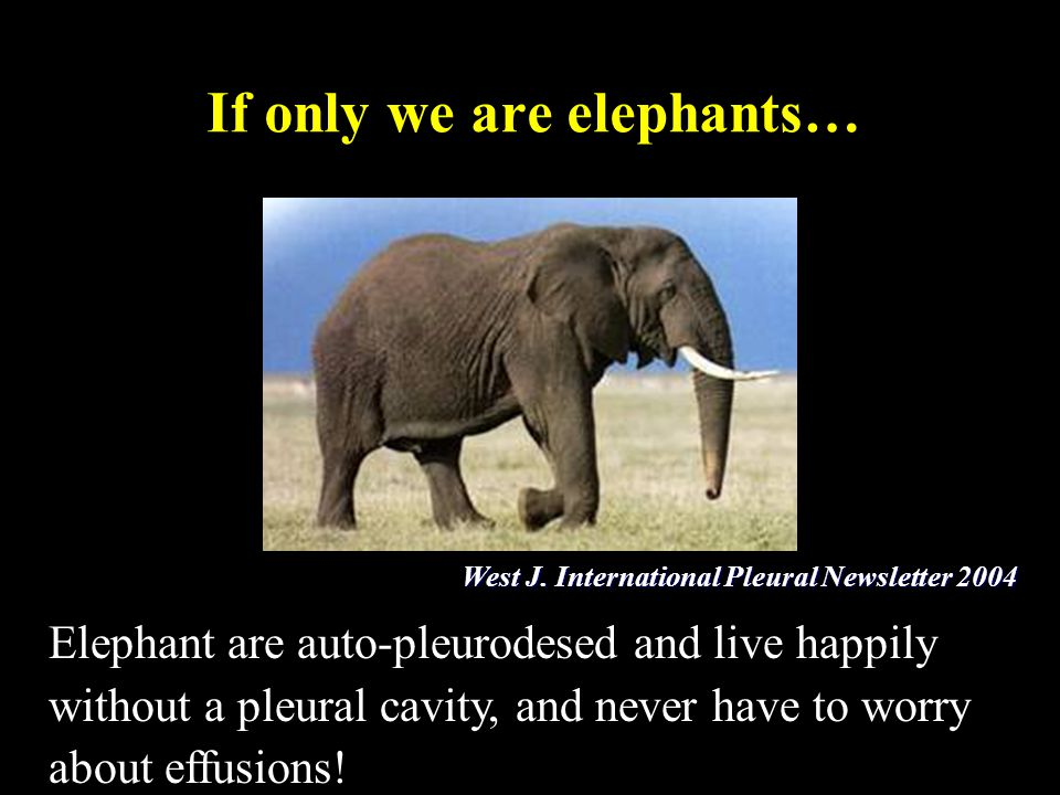 If only we are elephants… Elephant are auto-pleurodesed and live happily without a pleural cavity, and never have to worry about effusions! West J. In