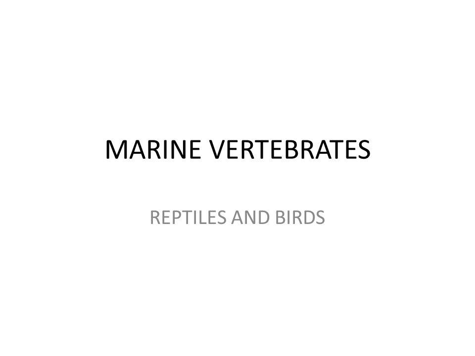 MARINE VERTEBRATES REPTILES AND BIRDS