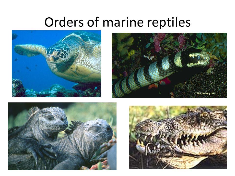 Orders of marine reptiles