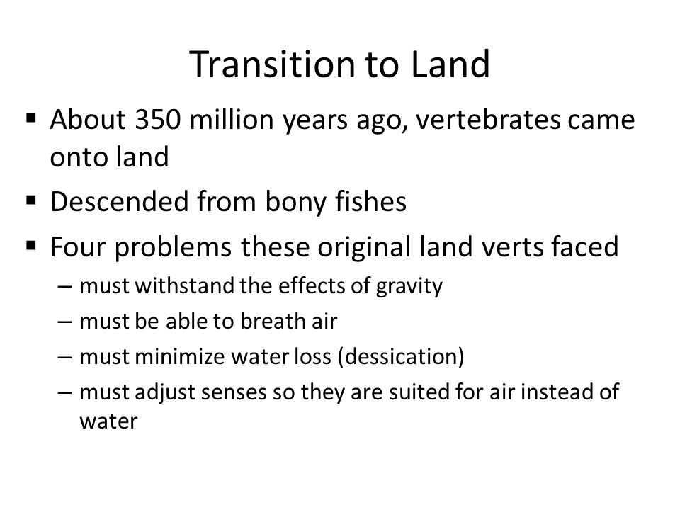 Transition to Land  About 350 million years ago, vertebrates came onto land  Descended from bony fishes  Four problems these original land verts faced – must withstand the effects of gravity – must be able to breath air – must minimize water loss (dessication) – must adjust senses so they are suited for air instead of water