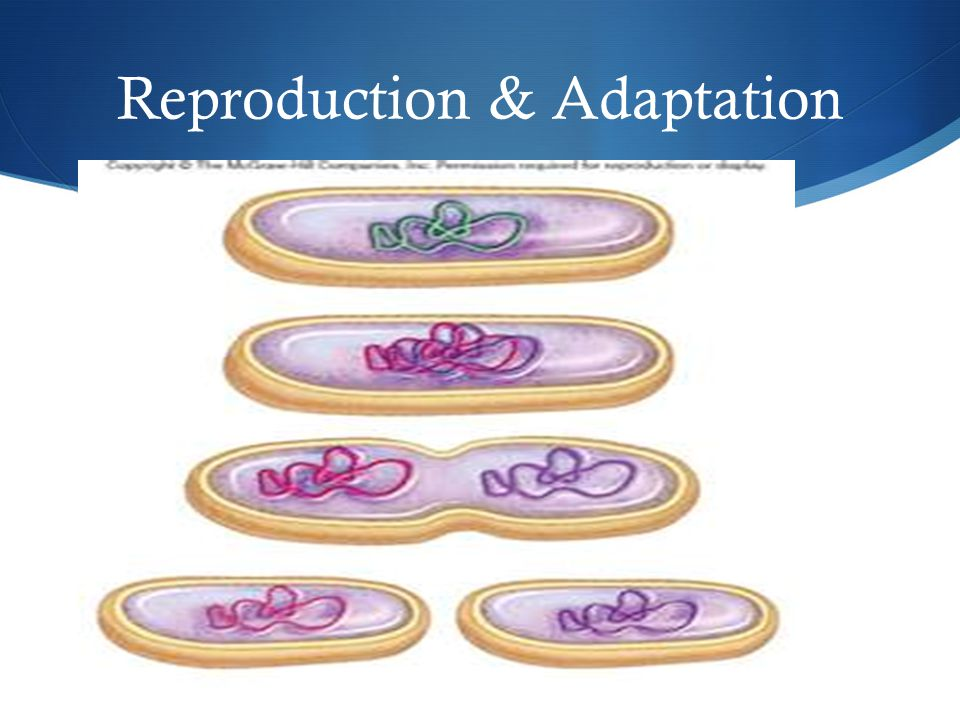 Reproduction & Adaptation