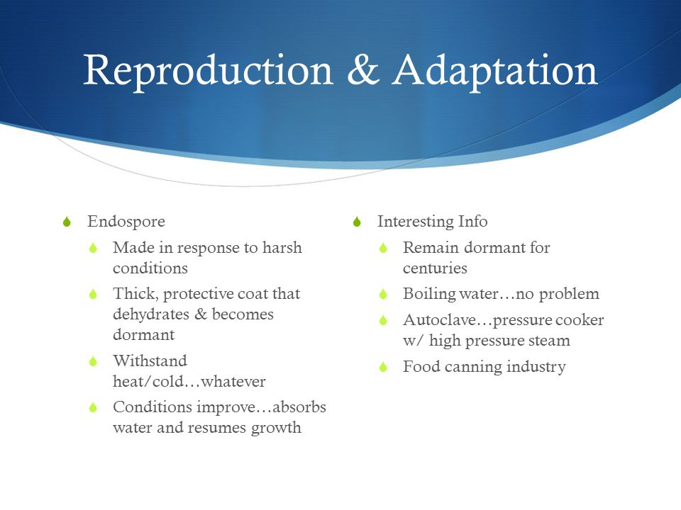 Reproduction & Adaptation  Endospore  Made in response to harsh conditions  Thick, protective coat that dehydrates & becomes dormant  Withstand heat/cold…whatever  Conditions improve…absorbs water and resumes growth  Interesting Info  Remain dormant for centuries  Boiling water…no problem  Autoclave…pressure cooker w/ high pressure steam  Food canning industry
