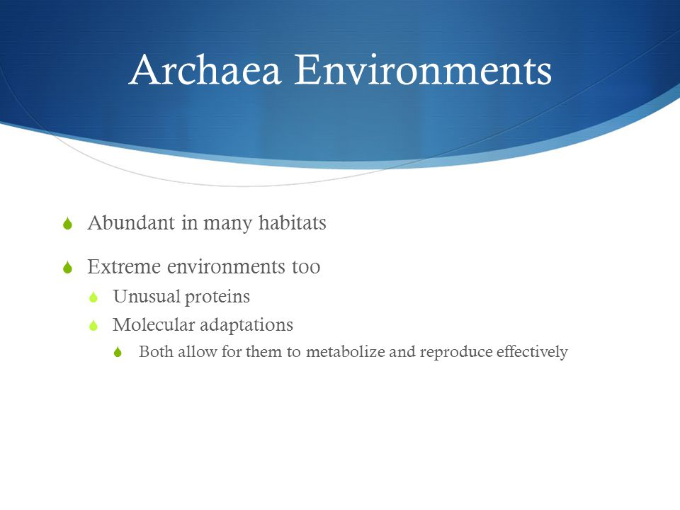 Archaea Environments  Abundant in many habitats  Extreme environments too  Unusual proteins  Molecular adaptations  Both allow for them to metabolize and reproduce effectively