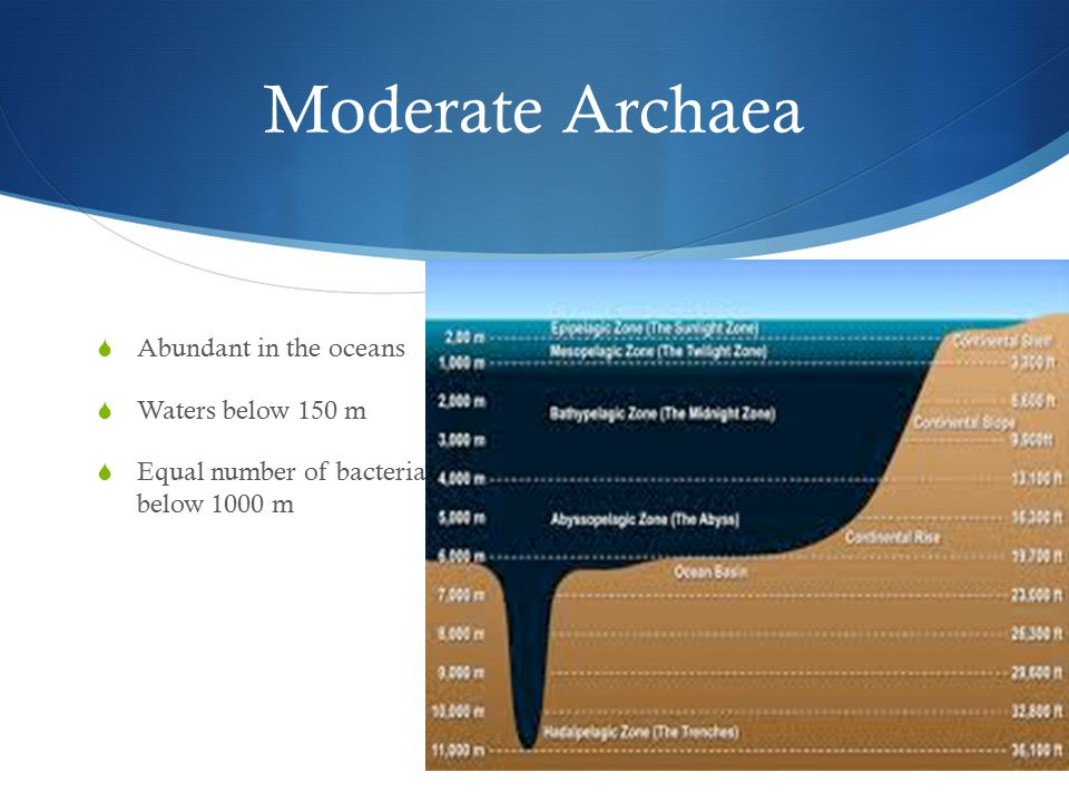 Moderate Archaea  Abundant in the oceans  Waters below 150 m  Equal number of bacteria below 1000 m