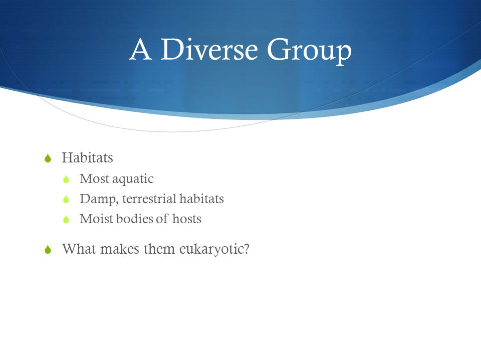 A Diverse Group  Habitats  Most aquatic  Damp, terrestrial habitats  Moist bodies of hosts  What makes them eukaryotic