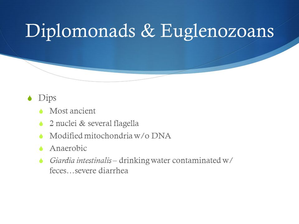 Diplomonads & Euglenozoans  Dips  Most ancient  2 nuclei & several flagella  Modified mitochondria w/o DNA  Anaerobic  Giardia intestinalis – drinking water contaminated w/ feces…severe diarrhea