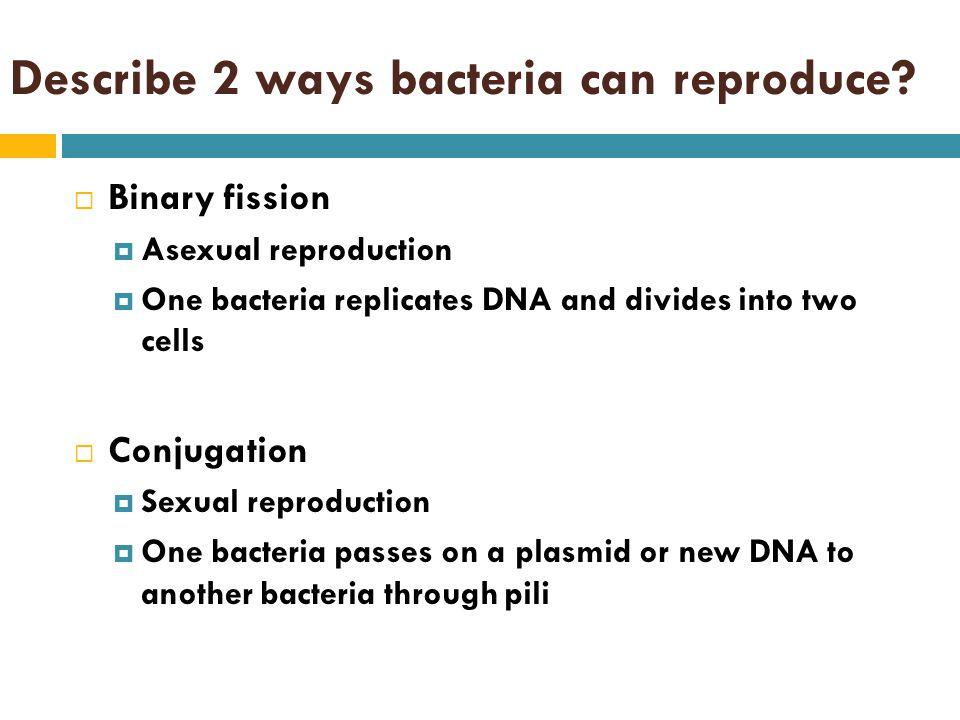 Describe 2 ways bacteria can reproduce.