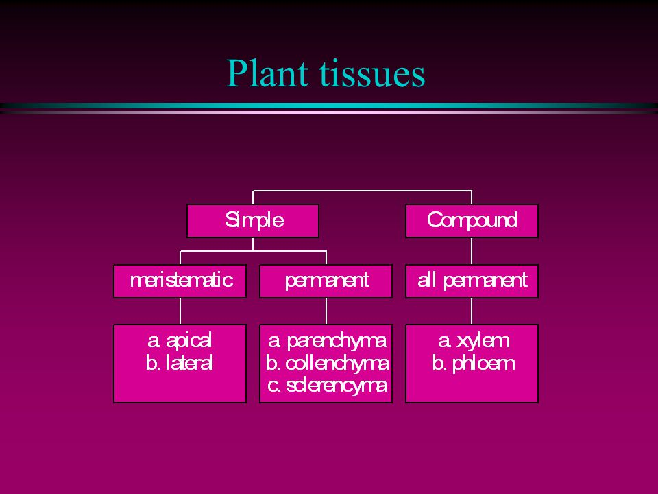 Definition: tissue l a TISSUE is a group of cells, usually of one kind, & their intercellular substance (e.g.