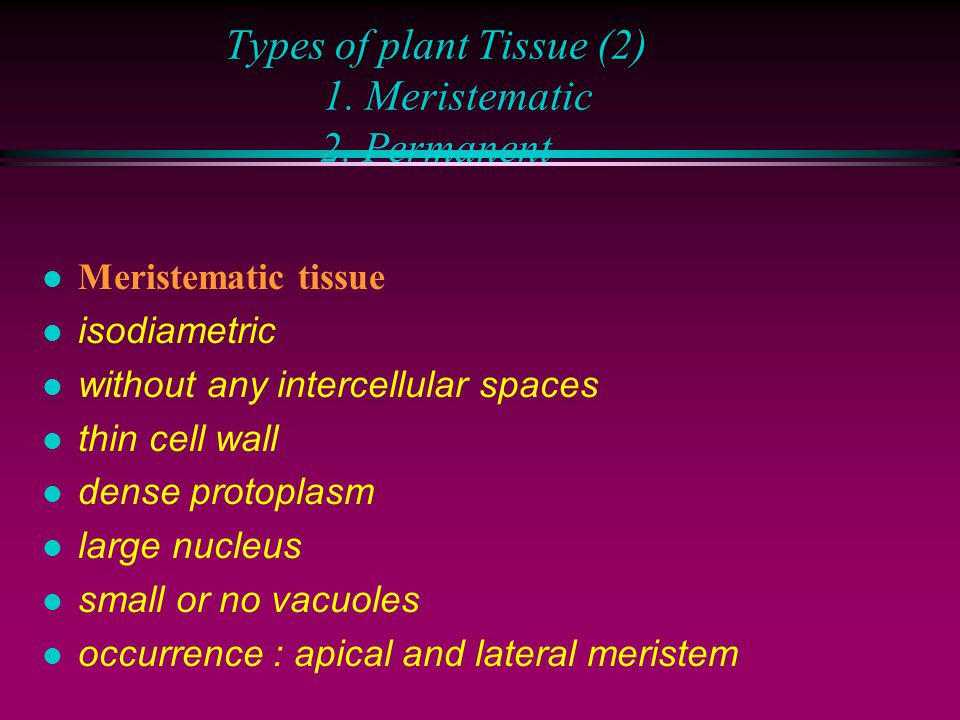 Types of plant tissue (1): 1. Simple 2.