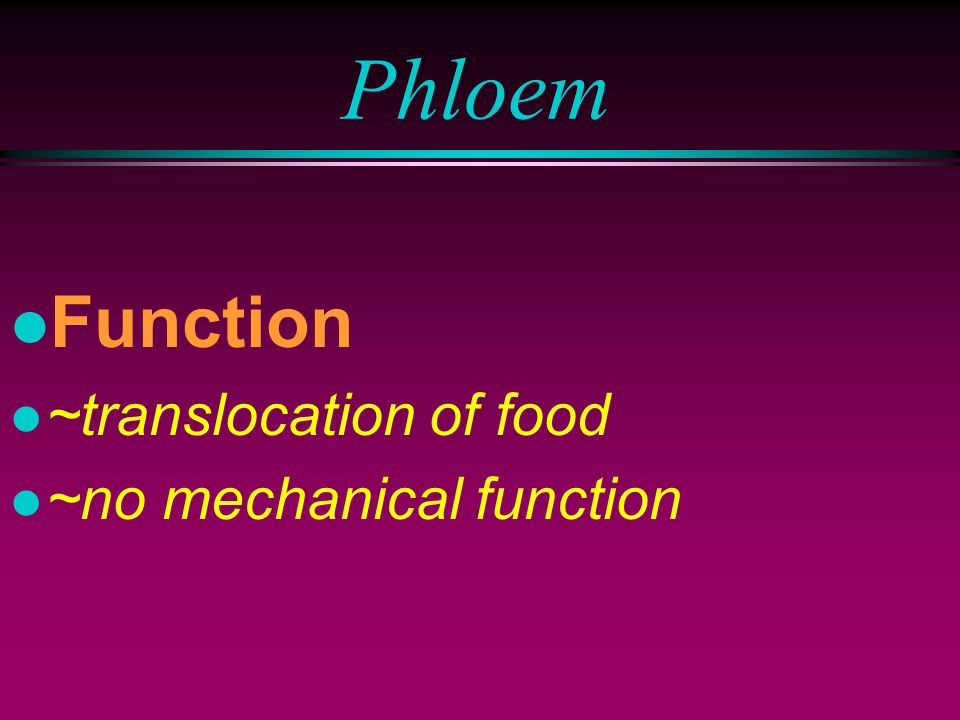 Compound plant tissue: phloem l Consist of: l ~parenchyma l ~fibres l ~sieve tube element l ~companion cells