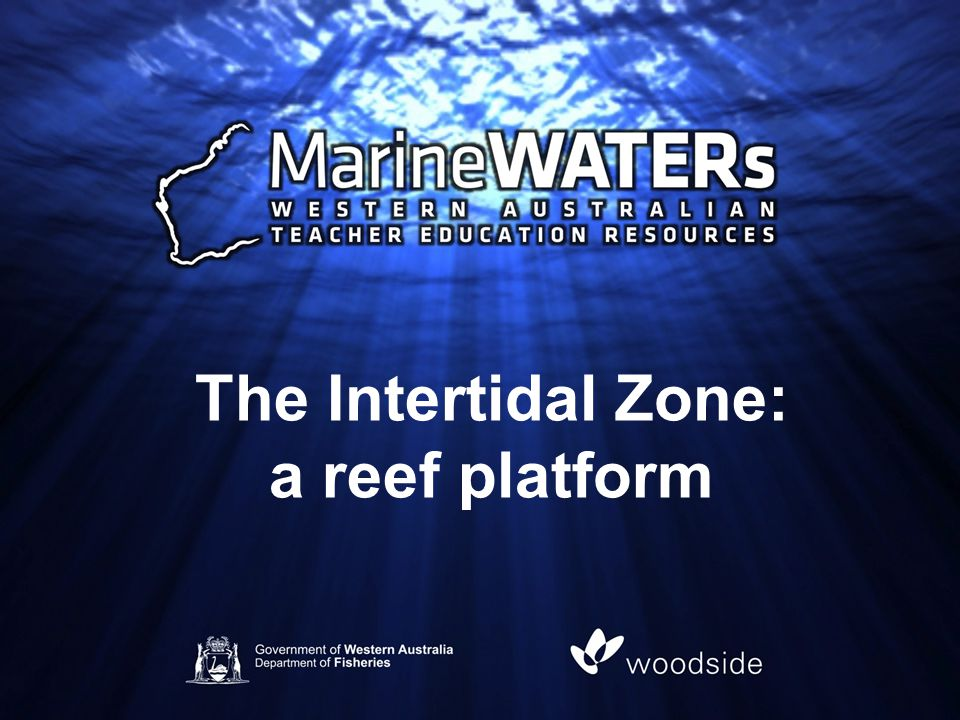 The Intertidal Zone: a reef platform