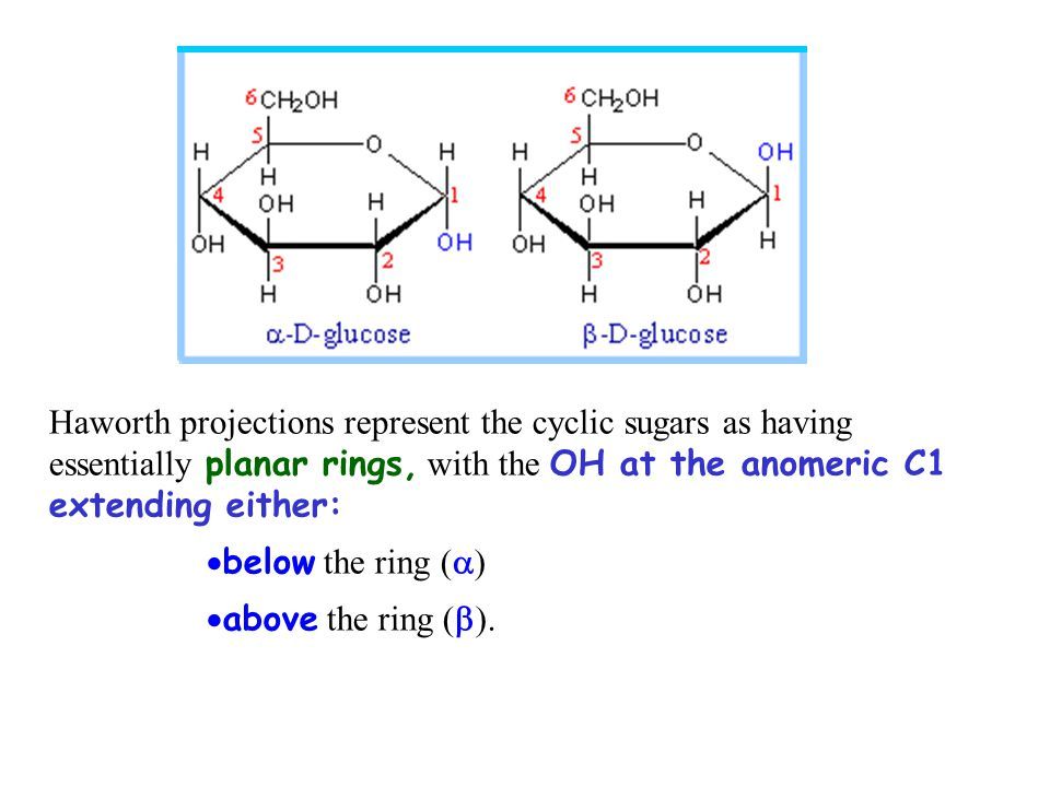 Haworth projections represent the cyclic sugars as having essentially planar rings, with the OH at the anomeric C1 extending either:  below the ring