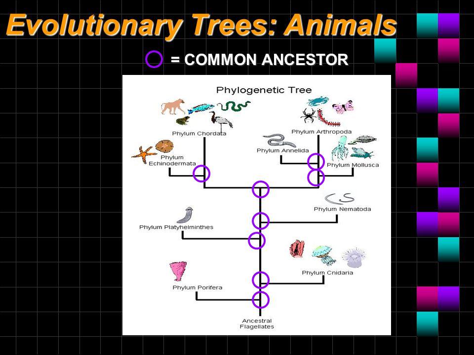 Evolutionary Trees: Animals = COMMON ANCESTOR
