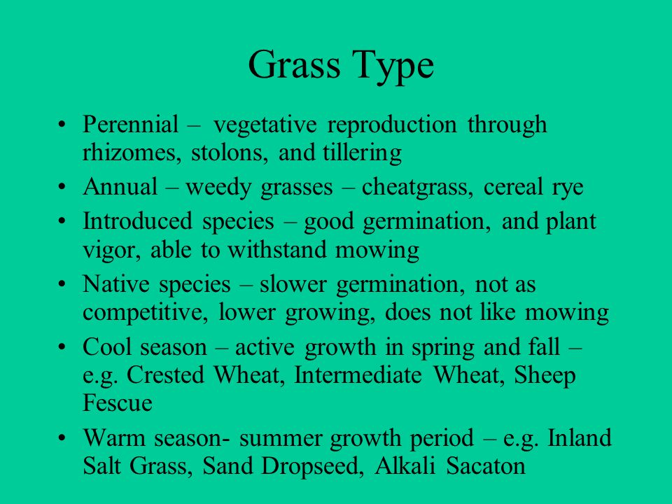 Grass Type Perennial – vegetative reproduction through rhizomes, stolons, and tillering Annual – weedy grasses – cheatgrass, cereal rye Introduced species – good germination, and plant vigor, able to withstand mowing Native species – slower germination, not as competitive, lower growing, does not like mowing Cool season – active growth in spring and fall – e.g.