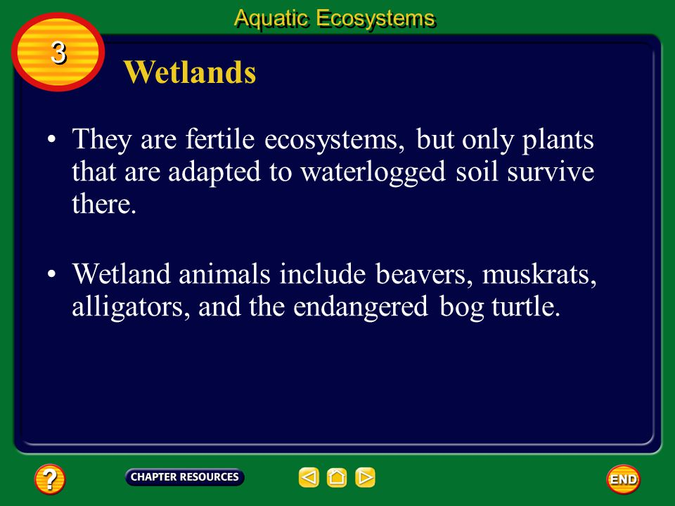 Wetlands Wetlands are regions that are wet for all or most of a year. 3 3 Aquatic Ecosystems Other names for wetlands include swamps, bogs, and fens.