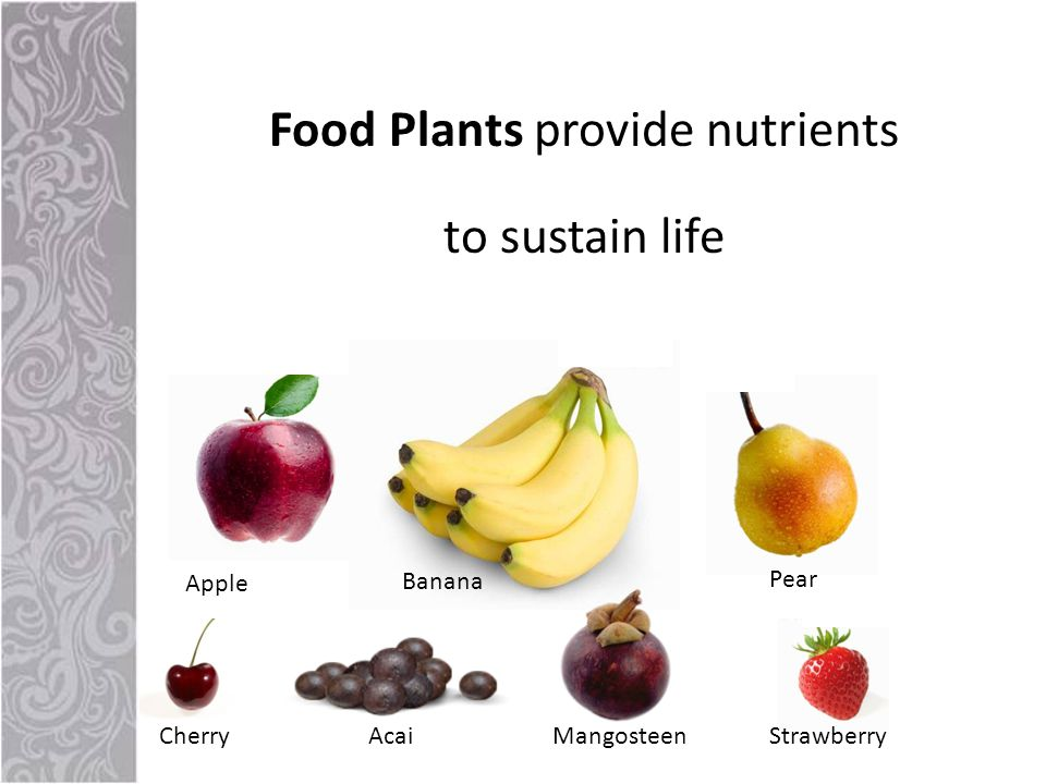 Food Plants provide nutrients to sustain life MangosteenAcaiStrawberryCherry Banana Apple Pear