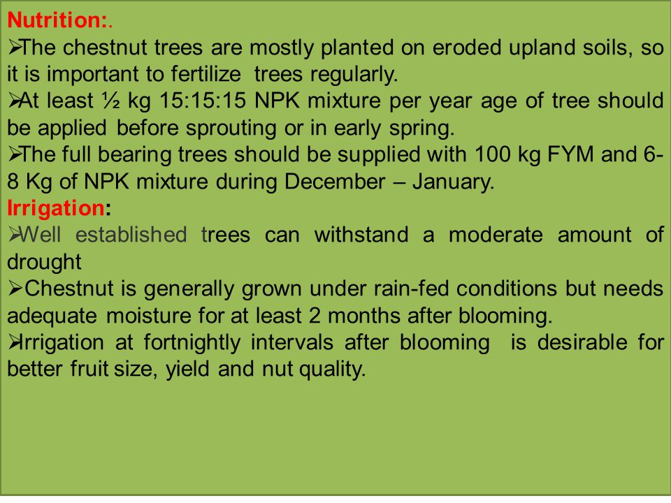 Nutrition:.  The chestnut trees are mostly planted on eroded upland soils, so it is important to fertilize trees regularly.  At least ½ kg 15:15:15
