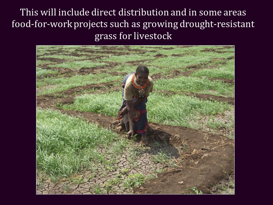 This will include direct distribution and in some areas food-for-work projects such as growing drought-resistant grass for livestock