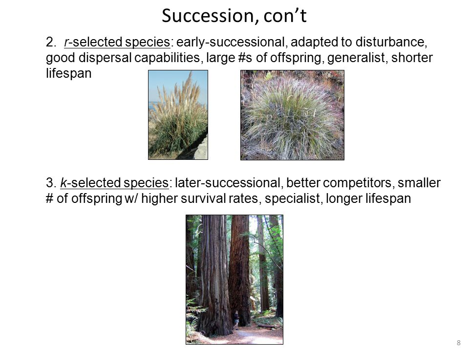 8 2. r-selected species: early-successional, adapted to disturbance, good dispersal capabilities, large #s of offspring, generalist, shorter lifespan