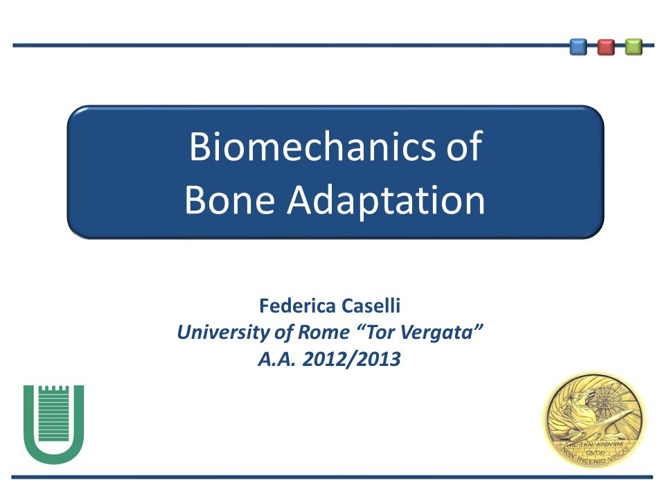 Biomechanics of Bone Adaptation Federica Caselli University of Rome Tor Vergata A.A. 2012/2013