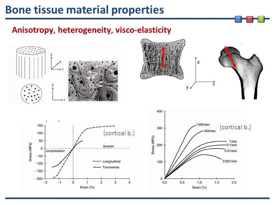 Bone tissue material properties Anisotropy, heterogeneity, visco-elasticity (cortical b.)