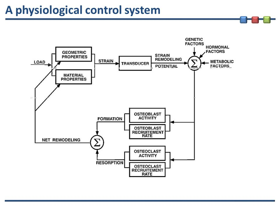 A physiological control system