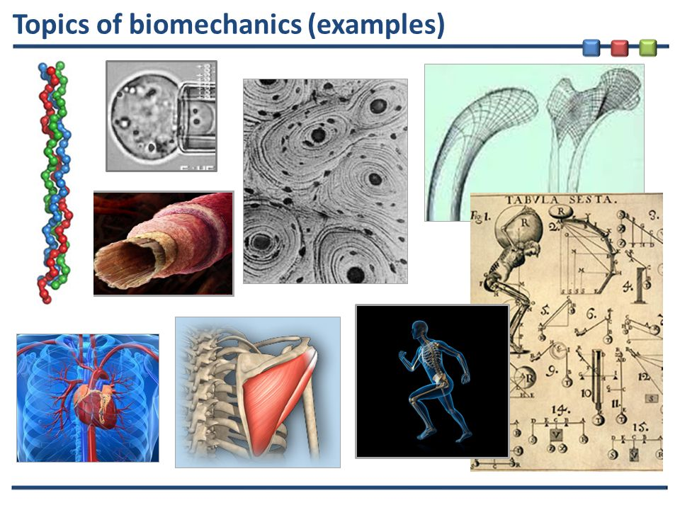 Topics of biomechanics (examples)