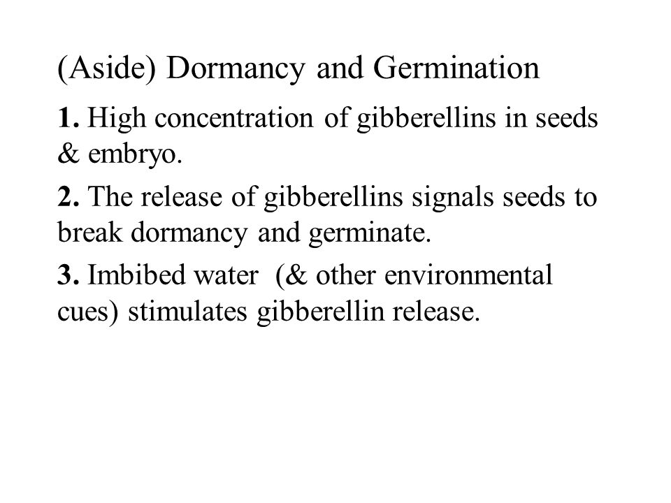 (Aside) Dormancy and Germination 1. High concentration of gibberellins in seeds & embryo. 2. The release of gibberellins signals seeds to break dorman