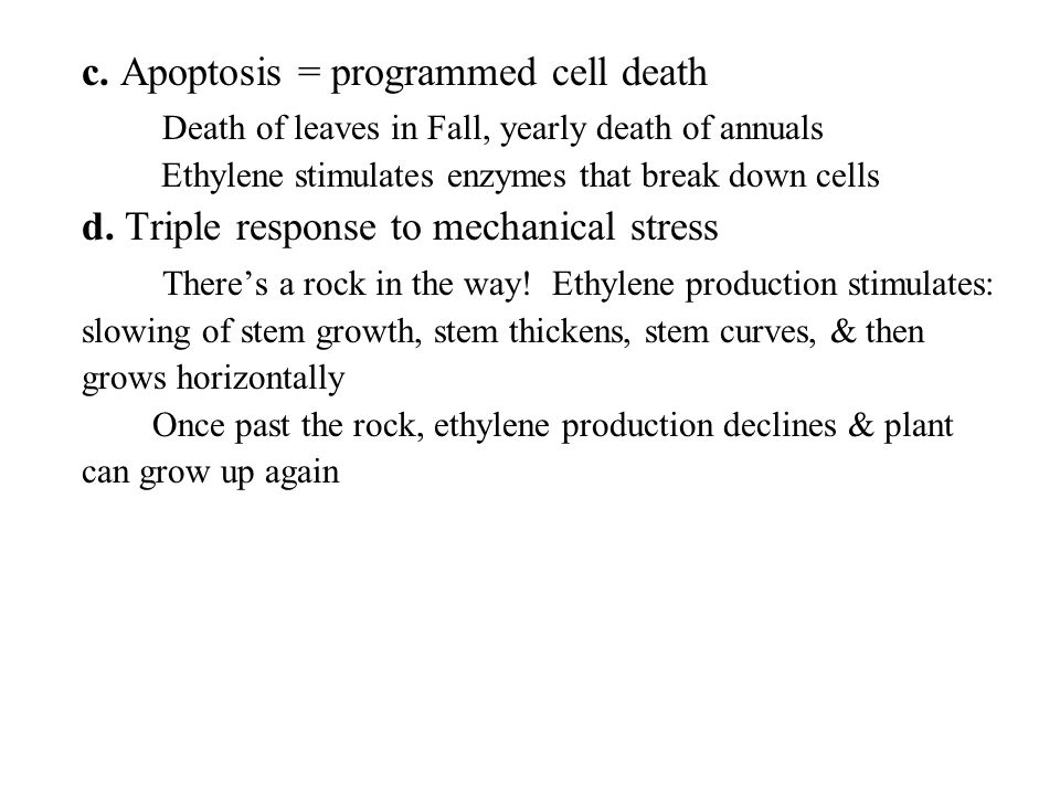 c. Apoptosis = programmed cell death Death of leaves in Fall, yearly death of annuals Ethylene stimulates enzymes that break down cells d. Triple resp