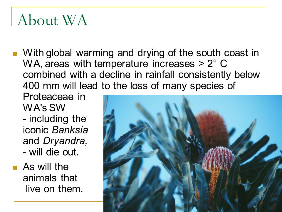 About WA With global warming and drying of the south coast in WA, areas with temperature increases > 2° C combined with a decline in rainfall consiste