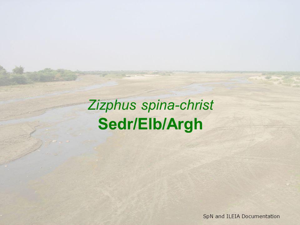SpN and ILEIA Documentation Zizphus spina-christ Sedr/Elb/Argh