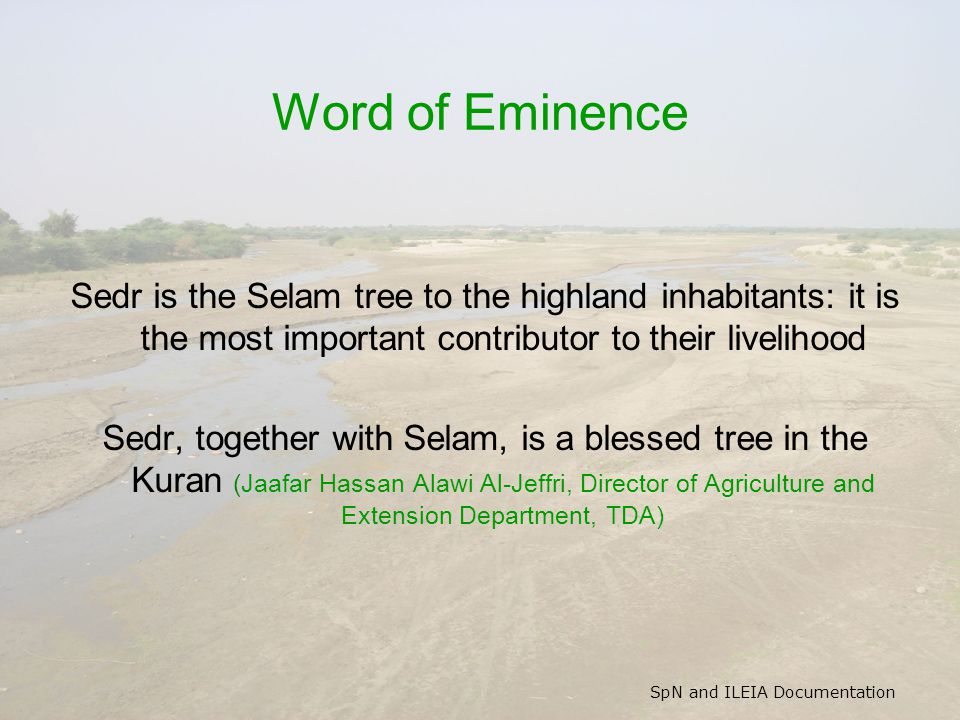 SpN and ILEIA Documentation Word of Eminence Sedr is the Selam tree to the highland inhabitants: it is the most important contributor to their livelihood Sedr, together with Selam, is a blessed tree in the Kuran (Jaafar Hassan Alawi Al-Jeffri, Director of Agriculture and Extension Department, TDA)