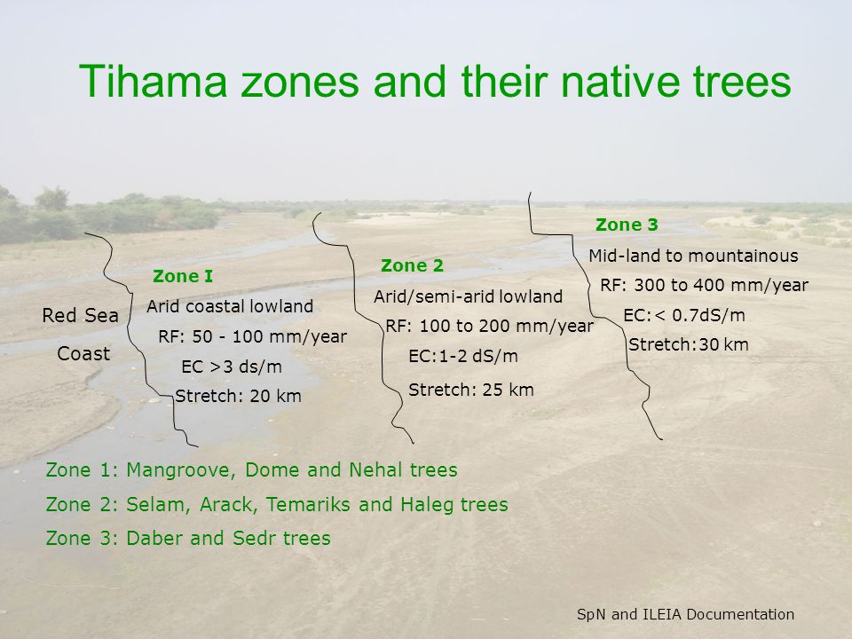 SpN and ILEIA Documentation Tihama zones and their native trees Red Sea Coast Zone I Arid coastal lowland RF: 50 - 100 mm/year EC >3 ds/m Stretch: 20 km Zone 1: Mangroove, Dome and Nehal trees Zone 2: Selam, Arack, Temariks and Haleg trees Zone 3: Daber and Sedr trees Zone 2 Arid/semi-arid lowland RF: 100 to 200 mm/year EC:1-2 dS/m Stretch: 25 km Zone 3 Mid-land to mountainous RF: 300 to 400 mm/year EC:< 0.7dS/m Stretch:30 km